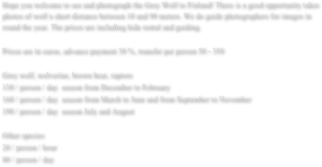 Hope you welcome to see and photograph the Grey Wolf to Finland! There is a good opportunity takes photos of wolf a short distance between 10 and 90 meters. We do guide photographers for images in round the year. The prices are including hide rental and guiding.